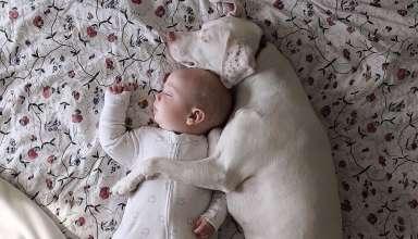 Английский пойнтер из приюта стал лучшим другом 8-месячному малышу