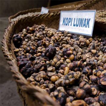 ТОП-10 самых дорогих продуктов в мире - Кофе