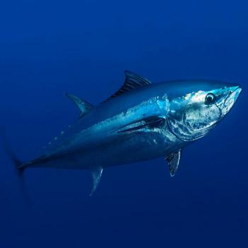 ТОП-10 самых дорогих продуктов в мире - Рыба