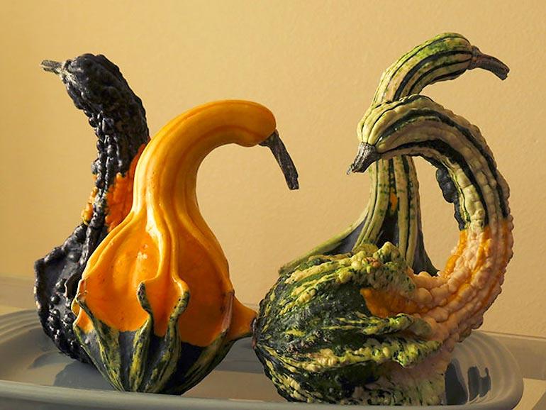 Самые необычные овощи и фрукты (30 фото)