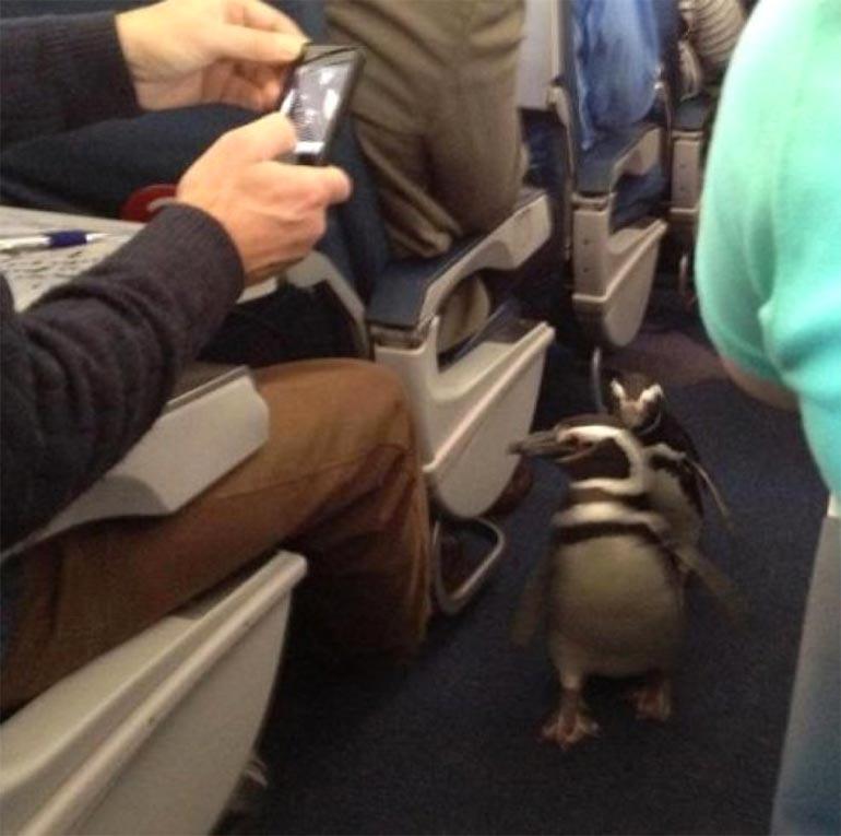 Что может случиться во время полёта на самолёте (19 фото)