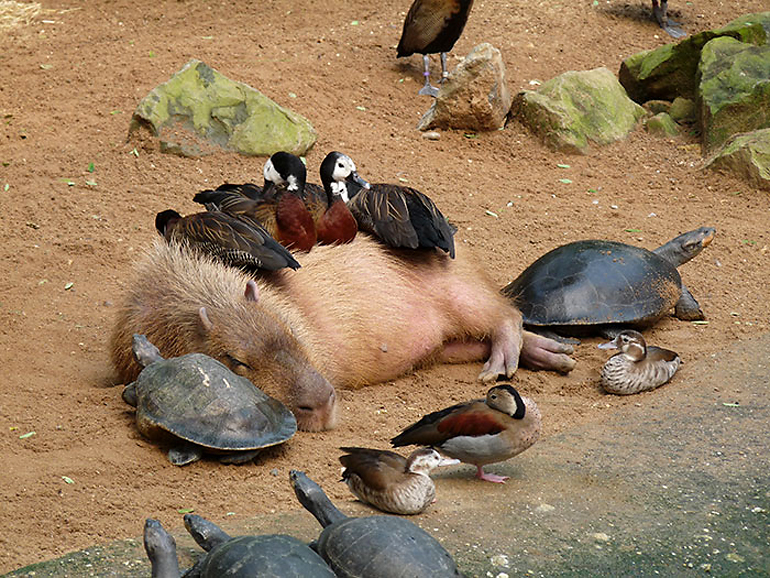 """Прикольные животные, которым """"всё по-барабану"""" (36 фото)"""